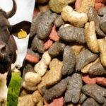 Российские учёные планируют создать кормовую добавку, заменяющую антибиотики